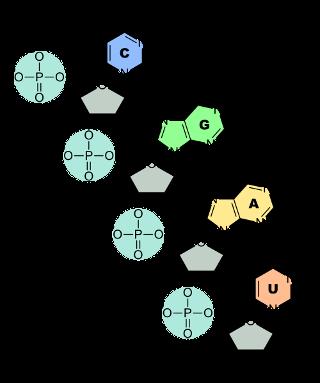 RNA-Nucleobases_320