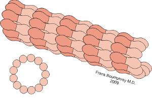 Microtubules_300