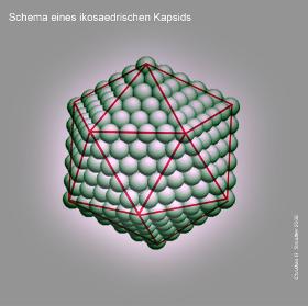 Kapsid_Schema_280