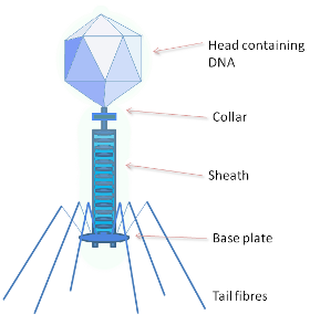 Phage_280